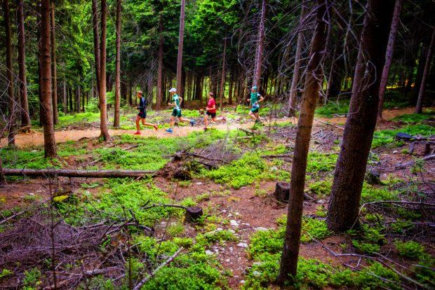 trasa dla biegaczy